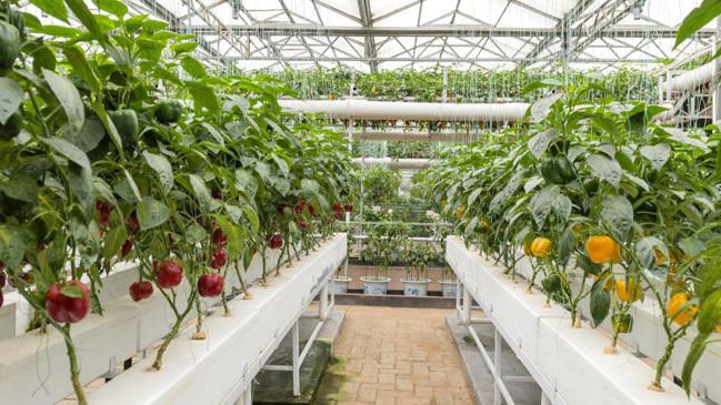 Bundesinformationszentrum Landwirtschaft Wie Baut Man Obst Und